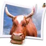 Экономика молочного скотоводства