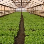 Народно-хозяйственное значение растениеводства