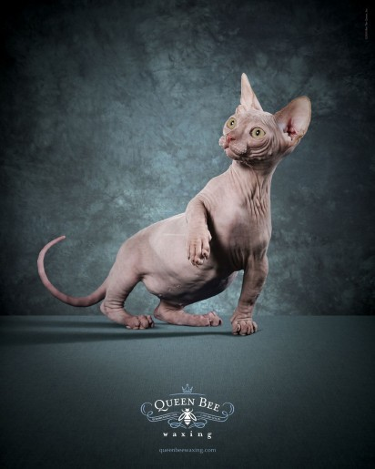 Кот в рекламе салона красоты