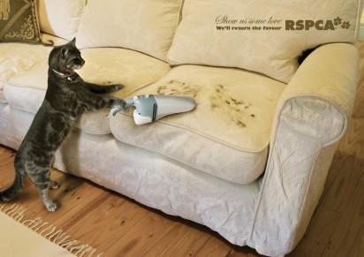 Кот чистит диван