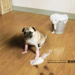Креативная #reklama №617 — Организация защиты животных RSPCA