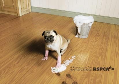 Собака моет пол