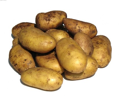 Производство картофеля