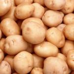 Экономический механизм взаимоотношений организаций по производству и переработке картофеля