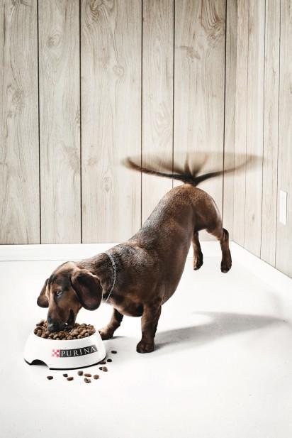 Реклама корма для псов