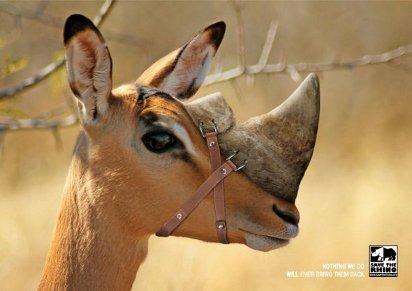 О спасении носорогов нужно думать уже сейчас