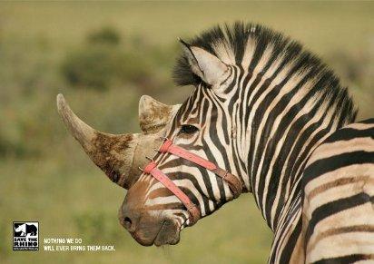 Спасите носорогов, пока не поздно