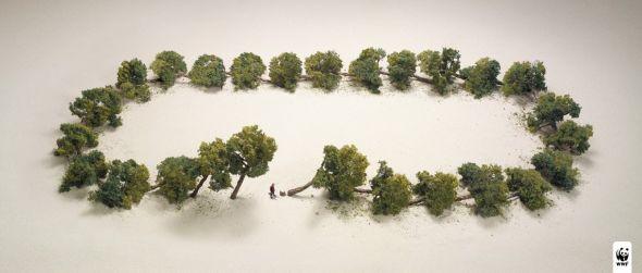 Против вырубки лесов