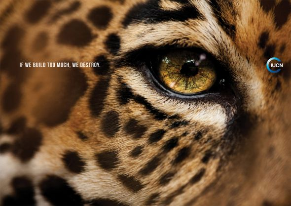 Реклама в защиту животных