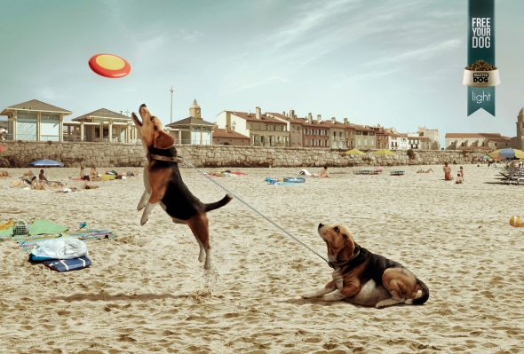 Новая реклама корма для собак