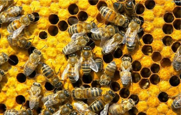 Вопросы пчеловодства