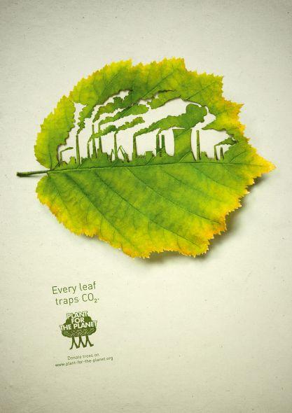 Листья поглощают CO2