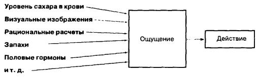 Роль рационального расчета в поведении