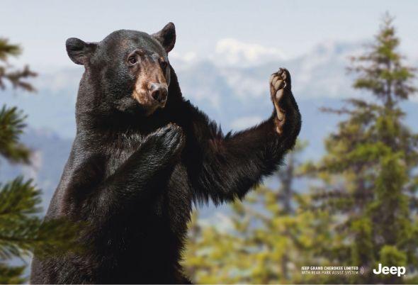 Медведь помогает парковаться